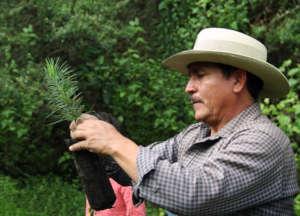 Getting Seedlings Ready