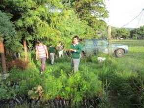 Children transporting trees for reforestation