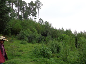 Thanks to reforestation the forest is coming back!