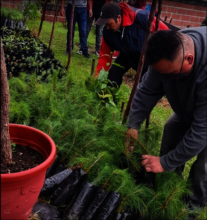 Men from N. Romero extract seedlings
