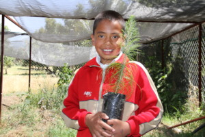 Child from El Santisimo with pine tree for nursery
