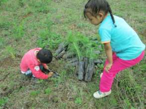 Kids removing pine trees from bags to plant