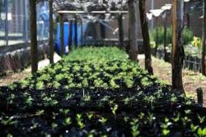 Community nursery ready for 2020 reforestation