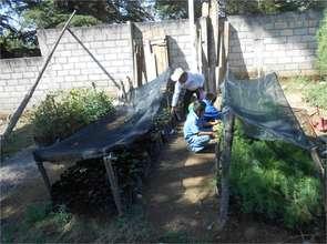 Children in N.Romero tend their tree nursery