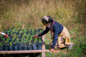 Tree Nursery in Carpinteros Community