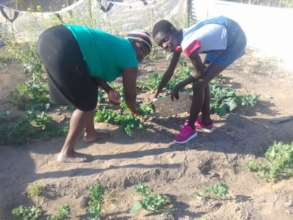 Food gardens do produce despite the poor soil