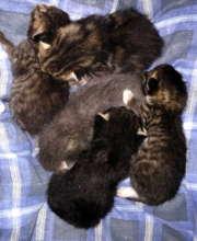 Newborn litter