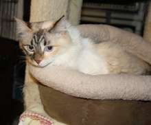 Cassiopeia awaiting adoption in Foster Care