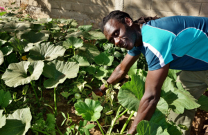 Issa proudly shows off new tomatos at Bango