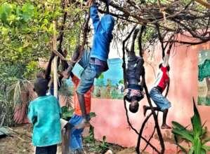 Grape vine arbor in garden becomes a climbing gym