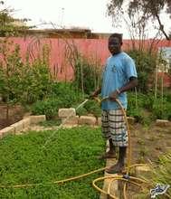 Mamadou watering mint, lovingly tending the garden