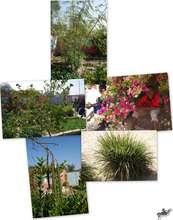 Garden highlights: Nebedaye, citronelle, lime, ...