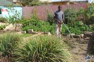 Ablaye is a faithful garden helper