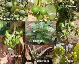 The produce of Maison de la Gare's garden