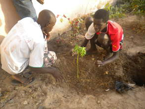 Talibe planting papaya tree in MDG centre