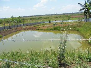 Fish pond (tilapia) project