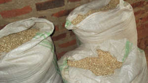 Maize (corn) to be milled for PLWA's in Tororo.