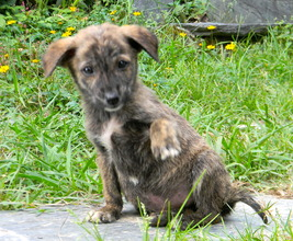 Malnourished puppy who lost her mom