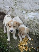 More hungry pups with no mom