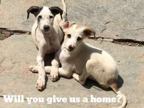 Will you give us a home?