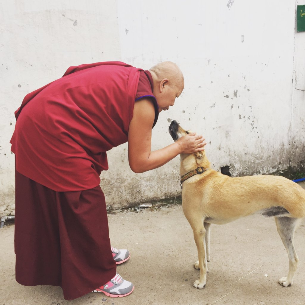 Help Street Dogs in Dharamsala and Save Lives