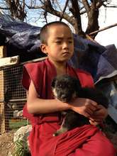 Little Monk with Little Puppy
