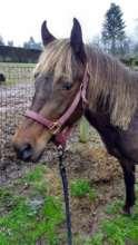 Giselle enjoying her foster home