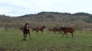 More of the mares that need help