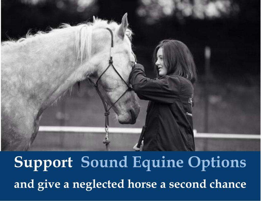 Give Health & Purpose to a Neglected Horse