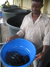 Fish from the on-site fish farm!