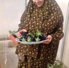 Several women planted eggplants on their roofs