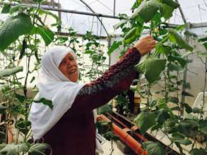 Khalti Hasna harvesting in her greenhouse