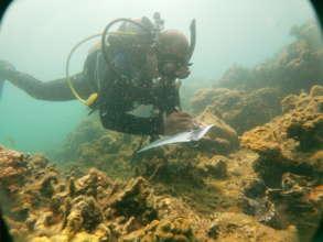 During  Talim bay  Reef Checking