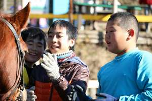 taking care of a horse with friends