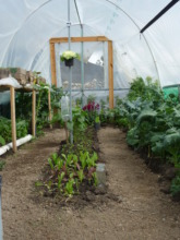 Micro tunnel with organic vegetables