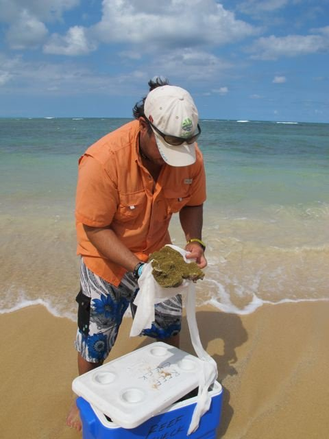 Coral Restoration in the Dominican Republic