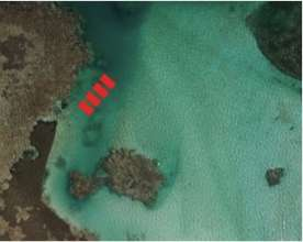Portillo Residences Coral Nursery Aerial View