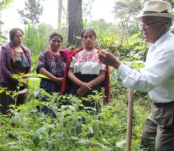 Don Manuel explains the difference between herbs