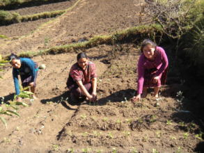 Josefa and Maria weeding their gardens.