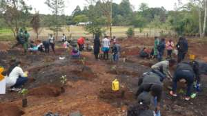 Tree planting session!