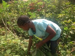 A girl harvesting vegetables at TAGS garden