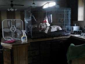 Tia's flooded house