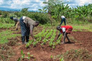 A Bio Intensive Agriculture Training Session