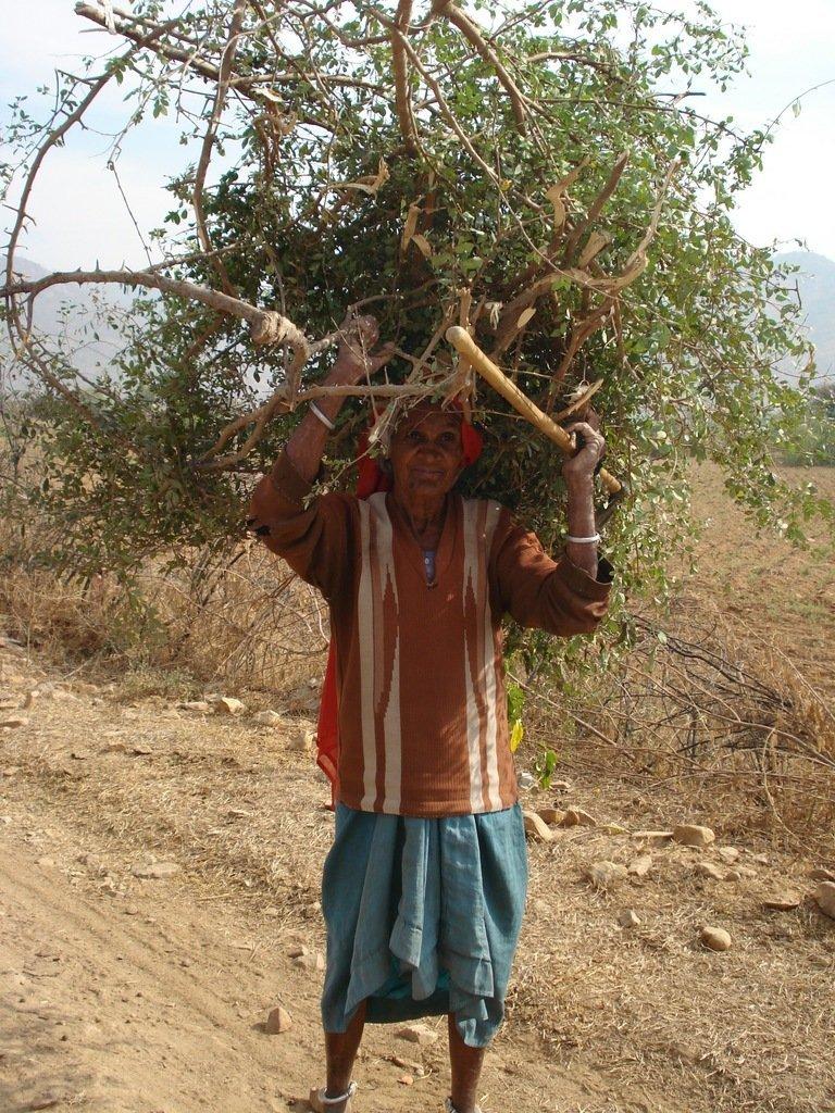 Stop deforestation and restore community lands
