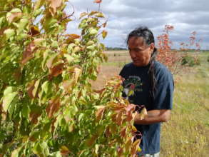 Standing Rock Sioux orchard going strong!