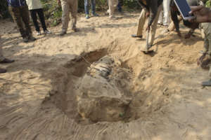 Post mortem procedure of Electrocuted Tiger