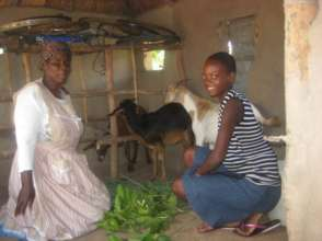 Gracious and her goats