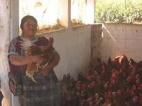 APROSADSE Chickens