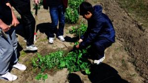 Yuuki growing vegetables