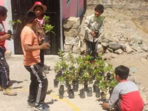 Reforestation in Peru